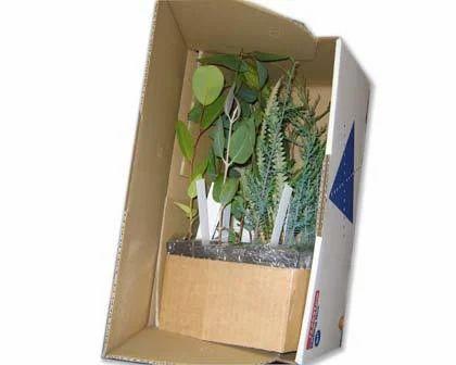 Acacia Acuminata Acacia Lingulataholosericaacacia Horrida D