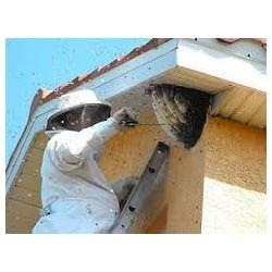 Honey Bee Control Service