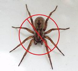 Spiders Pest Control Services