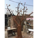 Wish Tree 12 Feet