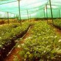 Hdpe Green Farm Shed Net, Length: 50 Meter