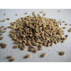 Anethum Sowa - Suva Extract