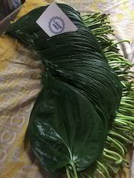 Sweet Green Betel Leaves
