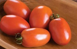 Tomato Seed, Pack Size: 10 gm