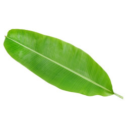 Raw Material for Banana Leaf