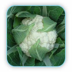 Hybrid Cauliflower