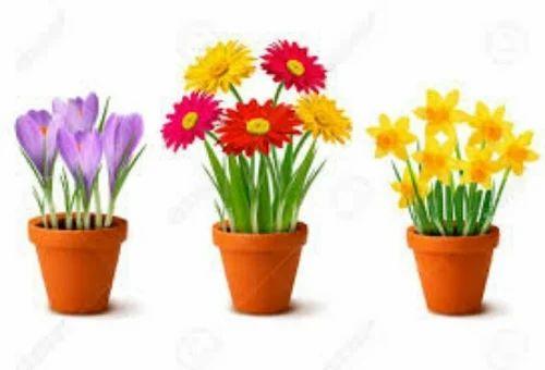 Decorative flower pot flower pot service provider from pune mightylinksfo