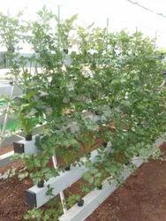 120 Plants Hydroponics NFT Systems