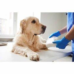 Dog Treatment Service