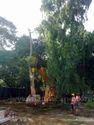 Tree Transplanting Service