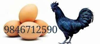 Kadaknath Egg