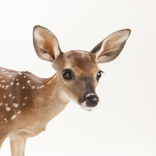 Fiber Male Deer Garden Statue
