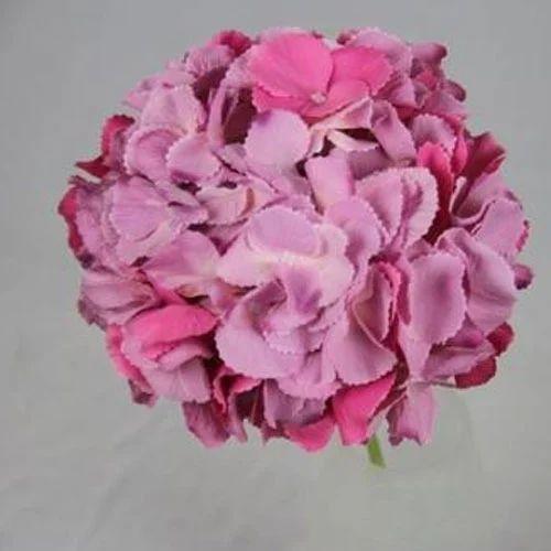 Dark Pink Hydrangea Flower At Rs 140