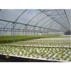Plastic Greenhouse Film