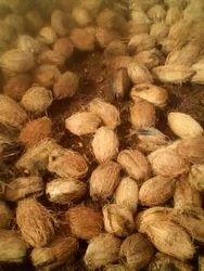 Coconut 45 Paruthi
