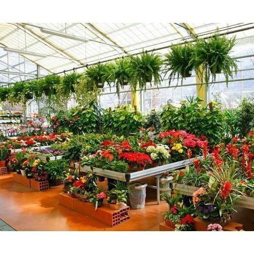 Decorative Nursery Plants