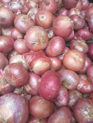 Onion in Bengaluru - Latest Price & Mandi Rates from Dealers