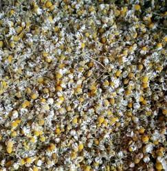 White Camomile Flowers