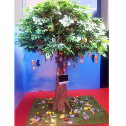 Ficus Tree for Event
