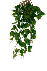 Artificial Money Plant Wall Hanging Foliage