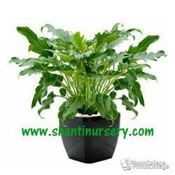 Jenado Decorative Indoor Plant