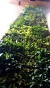 Hyperboles Professional Vertical Gardening Services
