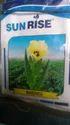 Bhendi Seeds