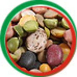 Pulses Beans