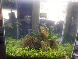 Freshwater Aquarium In Coimbatore Latest Price Amp Mandi
