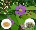 Banaba Extract Lagerstroemia Speciosa