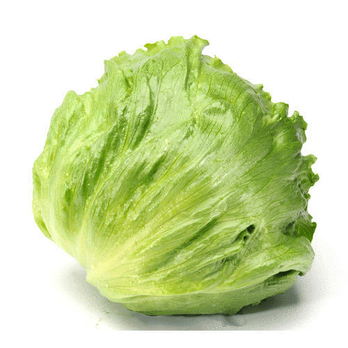 Iceberg Lettuce at Rs 80 /kilogram | Lettuce | ID: 13867030212