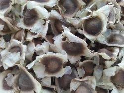 Black Moringa Conventional Seeds