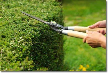 Elegant Maintenance Of Garden Works