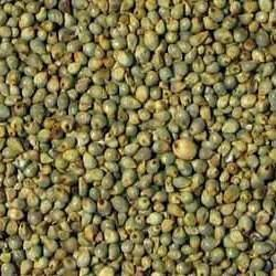 Whole Bajra, High in Protein