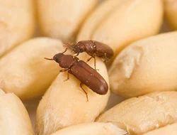 Stored Grain Pest Control Services