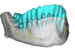 CBCT Image Processing Service