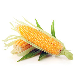PJ Yellow Maize, High in Protein