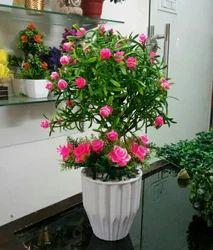 Hyperboles Artificial Plant