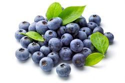 Blueberry Testing Services