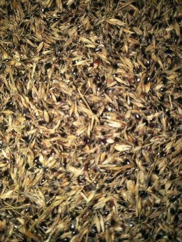 Agricultural Seeds, For Agriculture, Rs 350 /kilogram