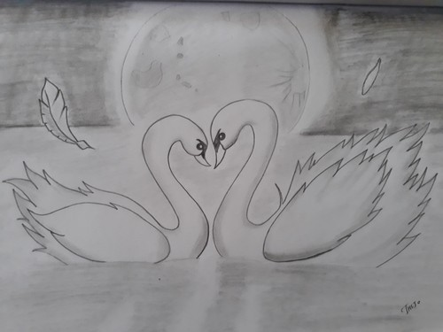 Swan Love Pencil Drawing And Friends 2 Members Portrait Service