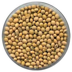 Soya Beans (Only for Export)
