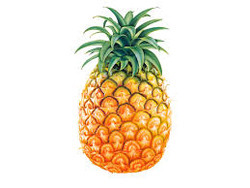 Pineapple Testing Services