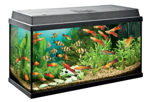 Fish tank images build your own fish tank fish bubble for Build your own fish tank
