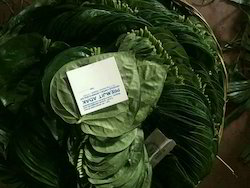 Herbal Betel Leaves