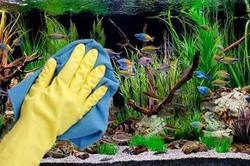 Fish Tank Cleaning