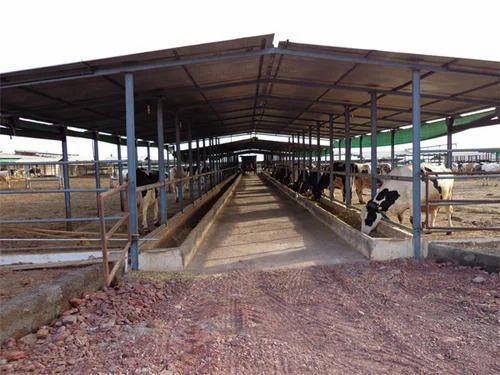Prefab Dairy Farm Shed Miri Piri Sheds Structures Pvt Ltd Manufacturer In Rohini Delhi