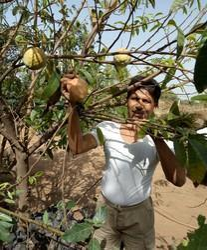 Agricultural Farm Advisors, India