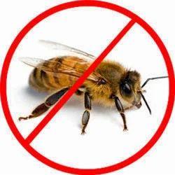 Honey Bee Pest Control Service