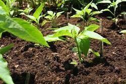Plant Growth Fertilizers